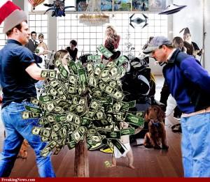 Money-Tree-109834
